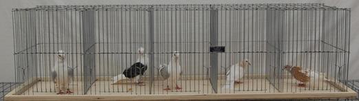 Keipper Cooping Pigeon Coop