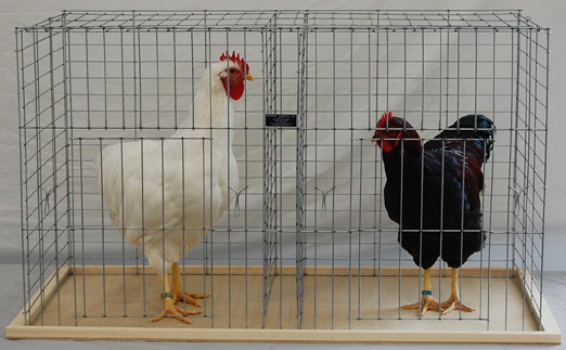Poultry Keipper Cooping Company