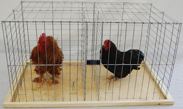 Keipper Cooping Poultry Coop